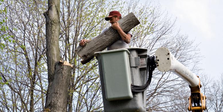 3b tree removal